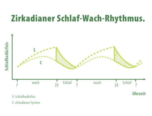 Zirkadianer Schla-Wach-Rhythmus
